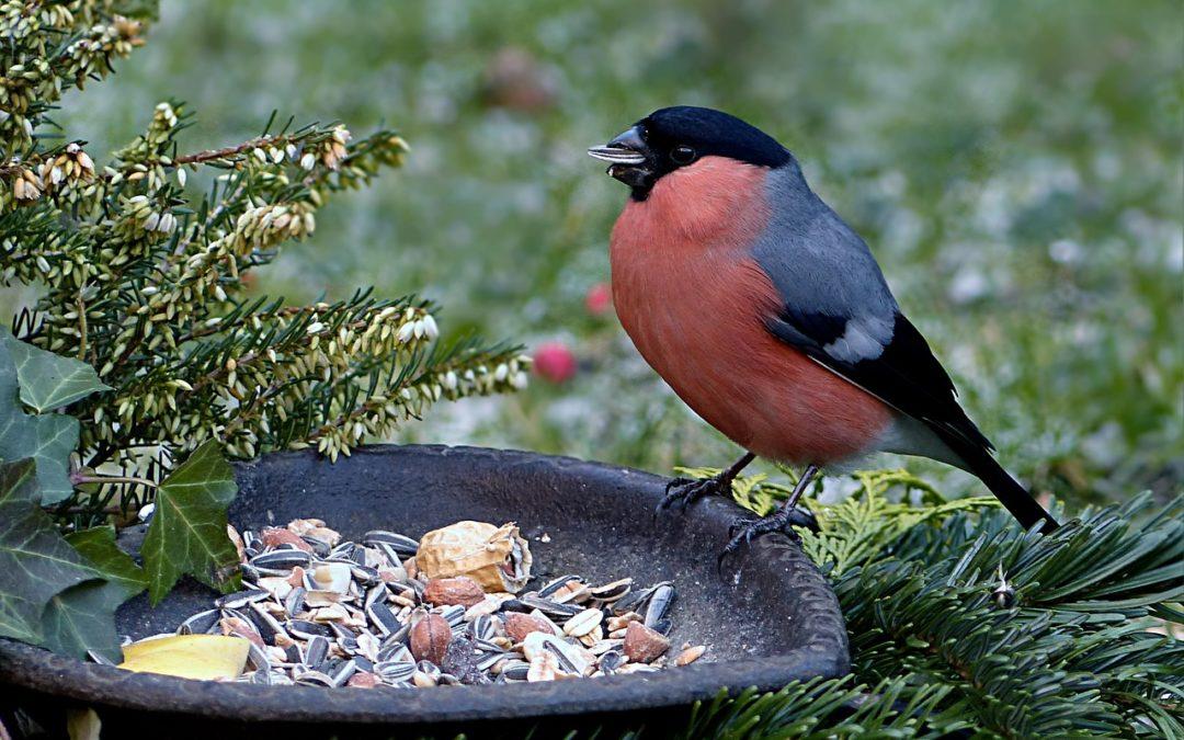 des boules de graisse pour les oiseaux du jardin ecolo villers le bouillet. Black Bedroom Furniture Sets. Home Design Ideas